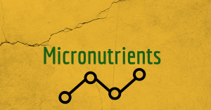 micronutrients for breastfeeding